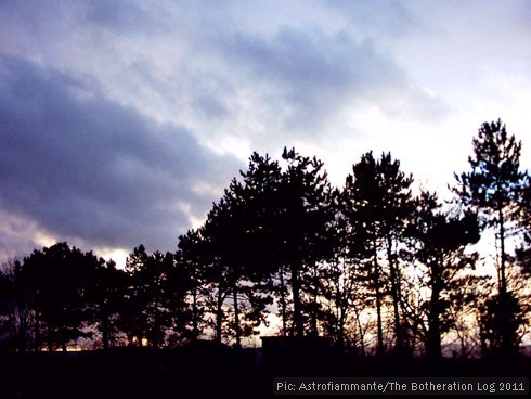 Twilight skyline with trees and clouds