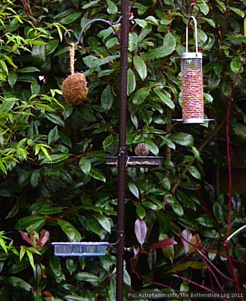 A sparrow on a bird feeder
