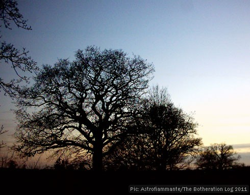 Trees silhouetted against evening sky