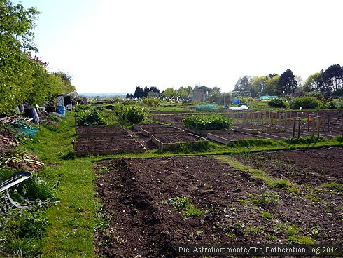 Allotments in spring