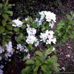 Blossom_02
