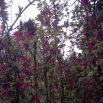 Blossom_04
