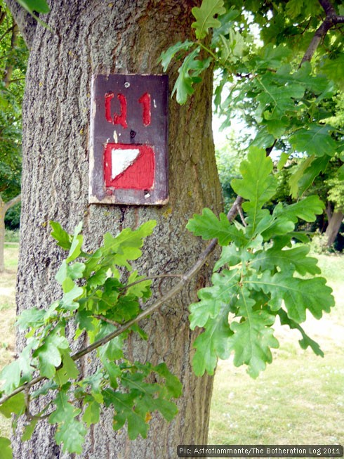 Orienteering control mark fixed to an oak tree