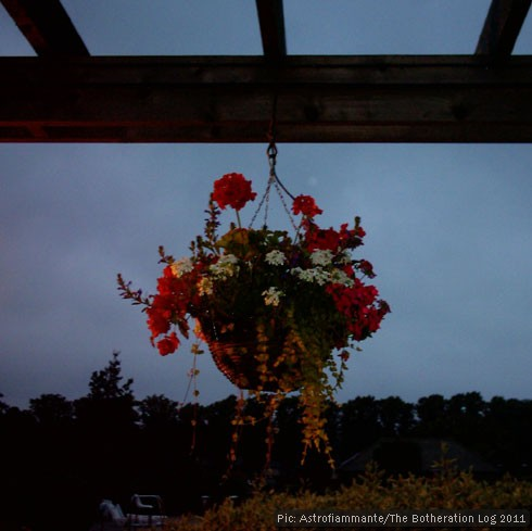 An outdoor hanging basket at dusk