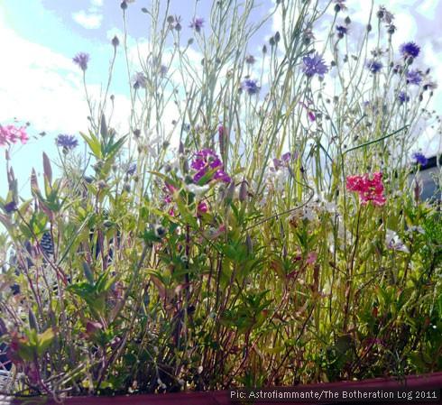 Wildflowers in bloom against a blue sky