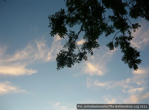 Tree branch in foreground of late-evening sky