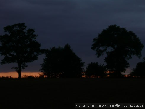 Trees on the skyline at sunset - dark