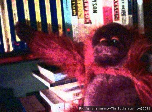 Toy orang-utan with bookshelves