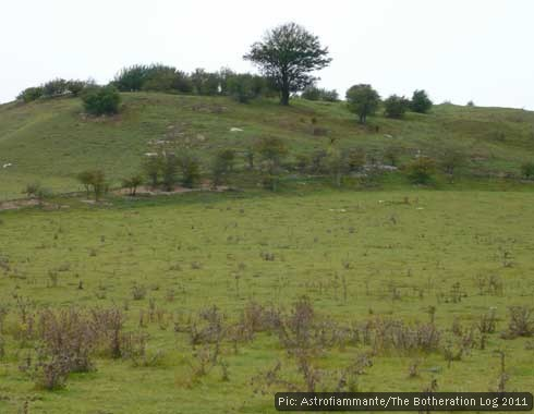 View of a tree-girded hillfort above a field used for grazing