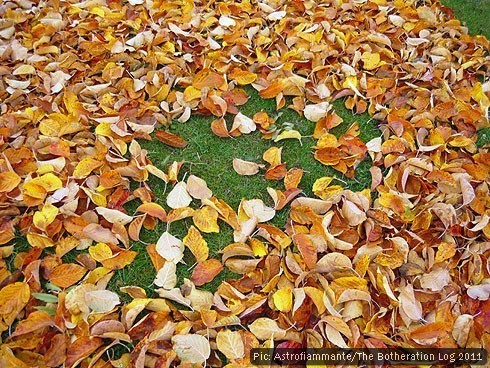 Autumn leaves almost covering a patch of grass