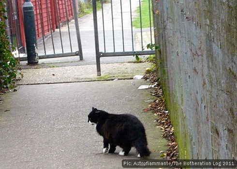 Black and white cat crossing a covered pedestrian walkway