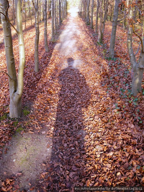 A shadow of a person stretching along the leafy floor of an avenue of trees