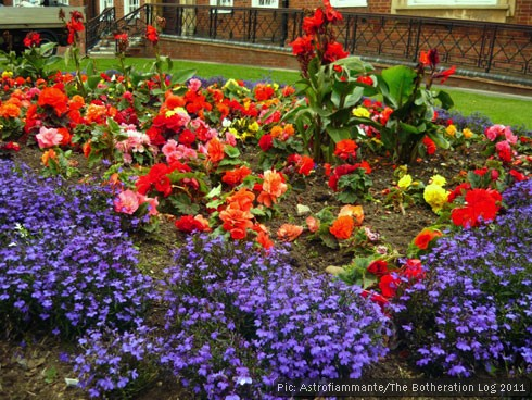 Town-centre flower bed planted out with summer bedding