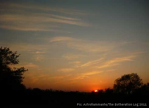 Sunset over a hedgerow